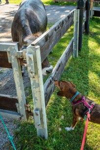 Henry findet neue Freunde...